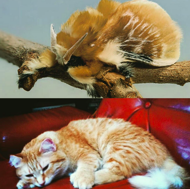 Who wore it best: this moth or my horrible girl?